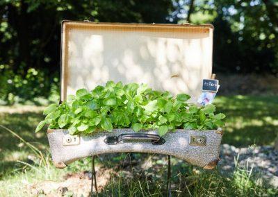 Koffer bepflanzt mit Kräutern